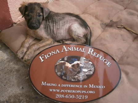 fiona-animal-refuge-2014-home-2